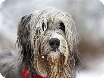 Ile Perrot Qc Briard Meet Doggy A