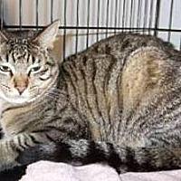 Adopt A Pet :: Comet - Miami, FL
