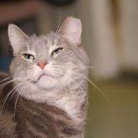 Adopt A Pet :: Champagne - New Freedom, PA
