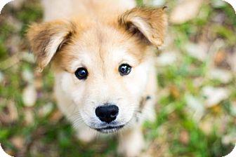 Austin Tx Australian Shepherd Meet Baxter A Pet For Adoption