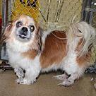 Adopt A Pet :: 26550 - Mickey