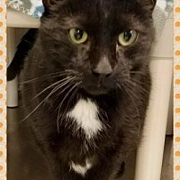 Adopt A Pet :: Buddy - Anderson, IN