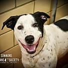 Adopt A Pet :: Simmons