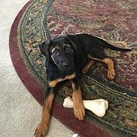 Adopt A Pet :: Skittles - Gainesville, VA