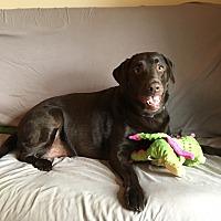 Adopt A Pet :: Gigi - Woodstock, ON