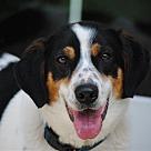 Adopt A Pet :: Marthah