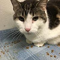 Adopt A Pet :: Bertholomew - Chicago Heights, IL