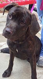 Adopt A Pet :: Sweet Gracie, Urgent call!!  - Ft Myers Beach, FL