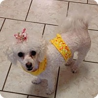 Adopt A Pet :: Yeppy: sweet quiet girl (PA) - Madison, WI