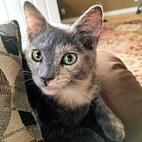 Adopt A Pet :: Beauty - Norristown, PA