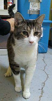 Adopt A Pet :: Honey Bunny  - Mt Vernon, IN