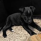 Adopt A Pet :: Marsellus