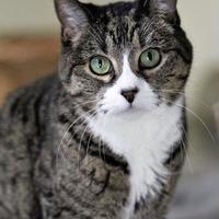 Adopt A Pet :: Tinka - Hastings, MN