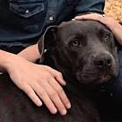 Adopt A Pet :: Ellie $125