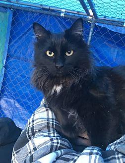 Adopt A Pet :: Gizmo  - Snow Hill, NC