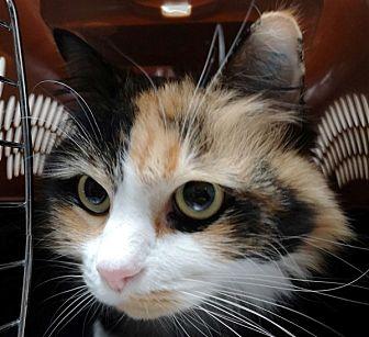 Adopt A Pet :: Mittens  - Edmonton, AB