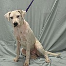 Adopt A Pet :: JUSTINE