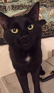 Adopt A Pet :: AF-Zara  - Devon, PA