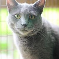 Adopt A Pet :: Owl - New Freedom, PA