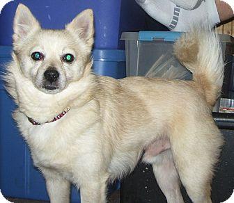 Sline Wa American Eskimo Dog