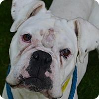 Adopt A Pet :: Pakita - Toledo, OH