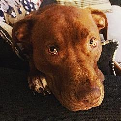 Puppies For Sale In Harlingen Texas Adoptapet Com