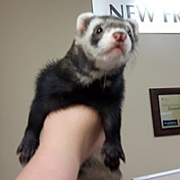 Adopt A Pet :: Odin - Edmonton, AB
