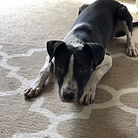 Adopt A Pet :: Hazel - Claremont, CA