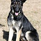 Adopt A Pet :: Bo