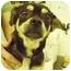 Photo 1 - Pug/Beagle Mix Dog for adoption in San Clemente, California - RASCAL