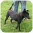 Photo 3 - Labrador Retriever Mix Dog for adoption in Lexington, Missouri - Dixon