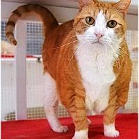 Adopt A Pet :: Peanut - Huntington, NY