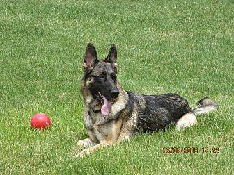 Adopt A Pet :: BROOK  - Nampa, ID