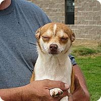 Adopt A Pet :: Peppers - Greenville, RI
