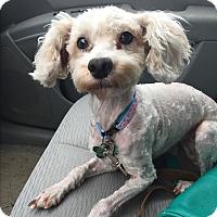 Adopt A Pet :: Annie - Starkville, MS