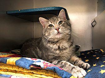 Adopt A Pet :: Barney  - Moose Jaw, SK