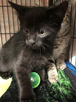 Adopt A Pet :: Kerwin  - Moose Jaw, SK