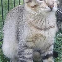 Adopt A Pet :: ASHLING - Modesto, CA