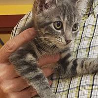Adopt A Pet :: Thing 2 - Hudson, NY
