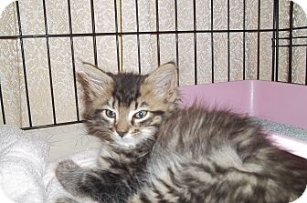 Cat Adoption House