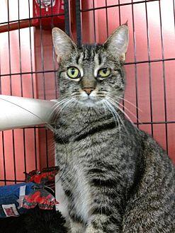 Adopt A Pet :: Marcella  - Devon, PA