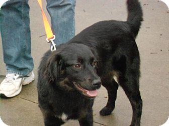 Raleigh, NC - Border Collie  Meet SASSY a Pet for Adoption