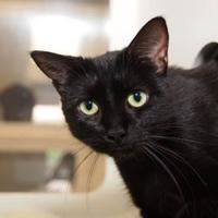 Adopt A Pet :: Jeeves - St. Catharines, ON