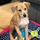 Adopt A Pet :: Dmitry