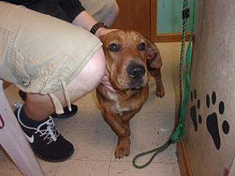 Adopt A Pet :: Samson  - Princeton, WV
