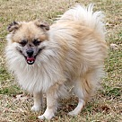 Adopt A Pet :: Cookie