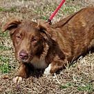 Adopt A Pet :: Jones B