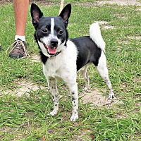 Adopt A Pet :: Apollo - Tavares, FL
