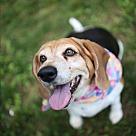 Adopt A Pet :: Scout