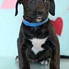 Adopt A Pet :: Higgins